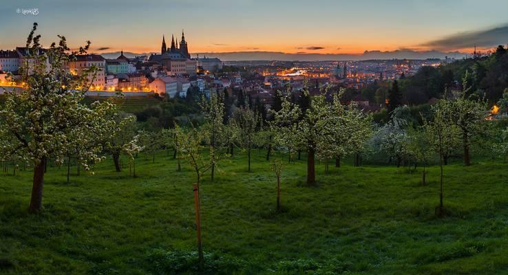 Prague Castle panorama from Strahovská garden