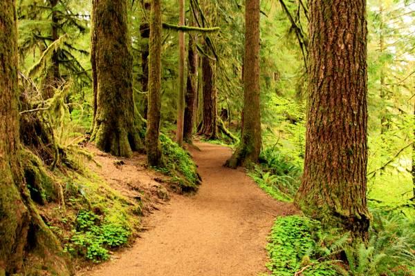 Drift Creek Falls Hiking Trail, Oregon