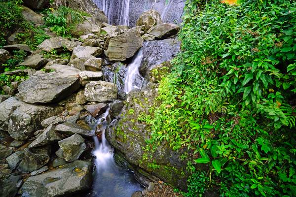 Running water of La Coca Waterfall, El Yunque National Forest